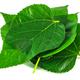 栄養の宝庫!? 桑の健康・美容効果について イメージ