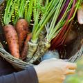 冬は根菜で決まり!肌に与える好影響とおすすめメニュー イメージ
